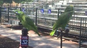 birds-interviewed